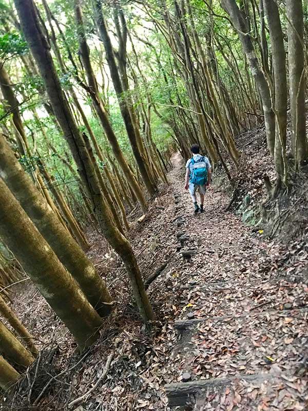 SGKT_24_Kunisaki_forest_trail.jpg