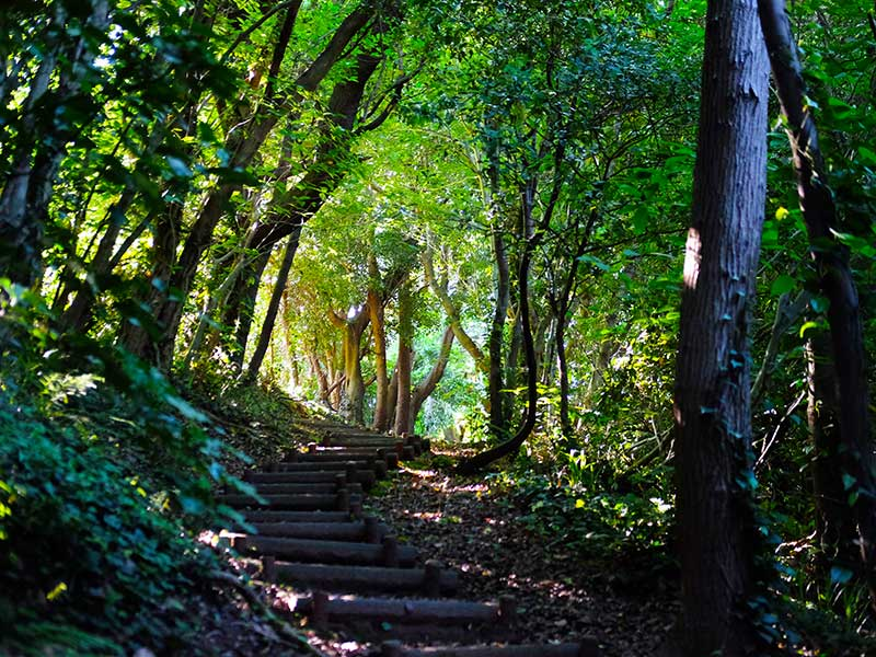SQ_24_Kasayama_Forest_path.jpg