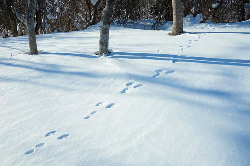 OGSA_06_Aizu_snow_tracks.jpg