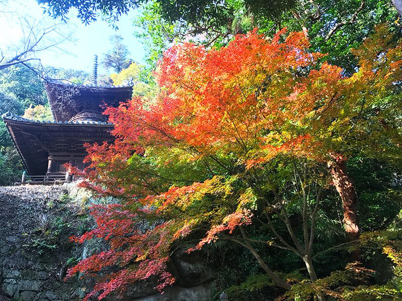 SGSTP_03__Shikoku_temple.jpg