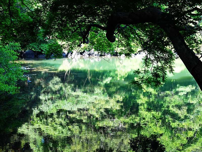 SQ_10_Kasanuma_Pond.jpg