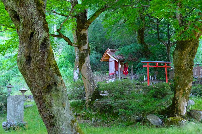 SQ_08_Tsuwano_forest_shrine.jpg
