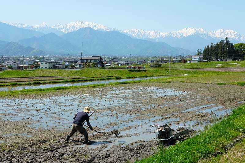 SMSR_017_Ikeda_rice_paddies.jpg
