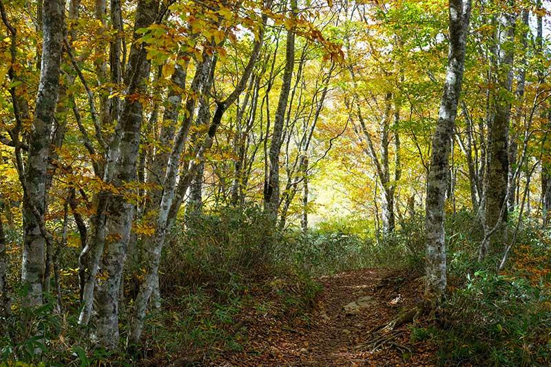 TAE_13_Urabandai_woods.jpg