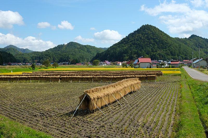 TAE_16_Aizu_rice_paddy.jpg