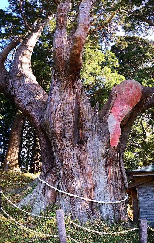 MCT_26_Okirai_ancient_sugi_tree.jpg