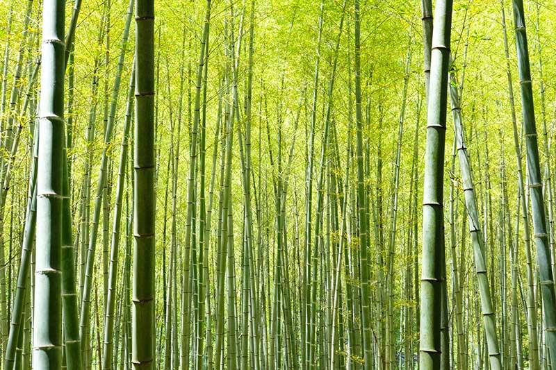 SQ_18_Hagi_Oukan_bamboo.jpg