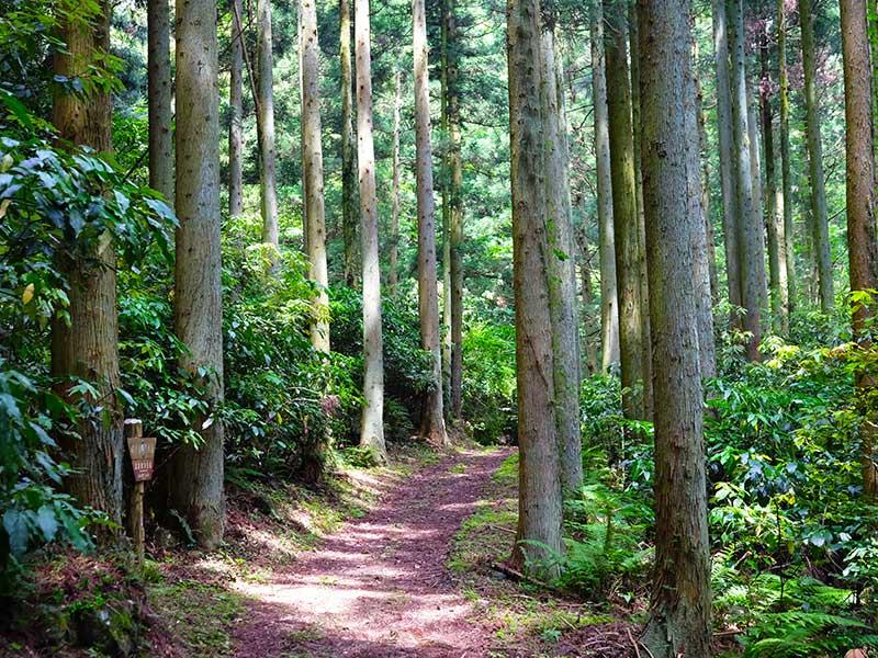 SQ_29_Iwami_Ginzan_path.jpg