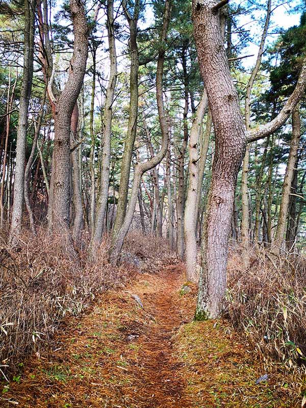 MCT_33_Samuraihama_path.jpg