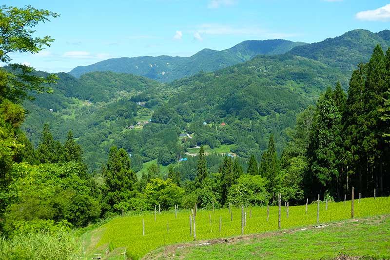 SMSR_031_Otari_valley.jpg