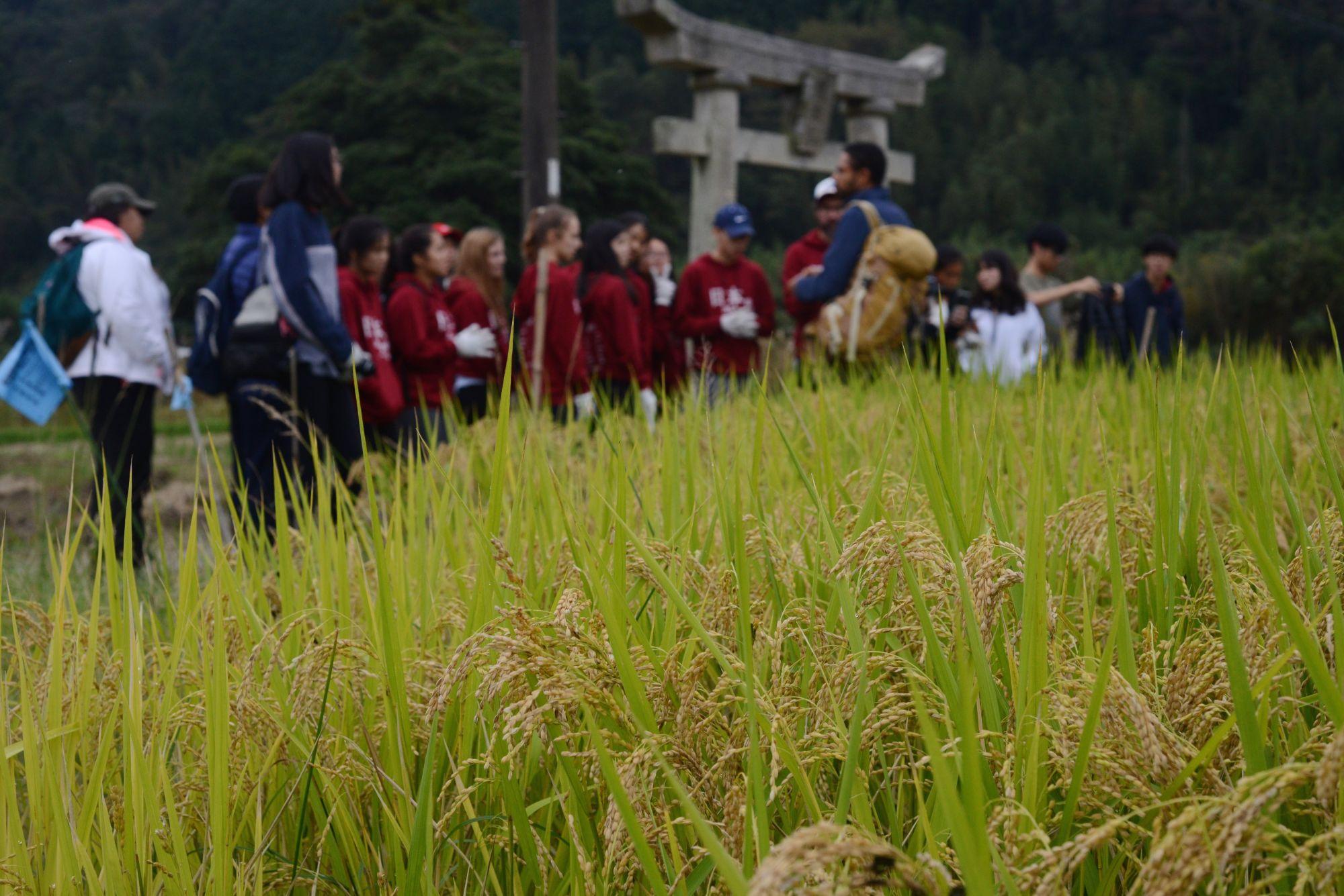 ETKT_ricefield.JPG