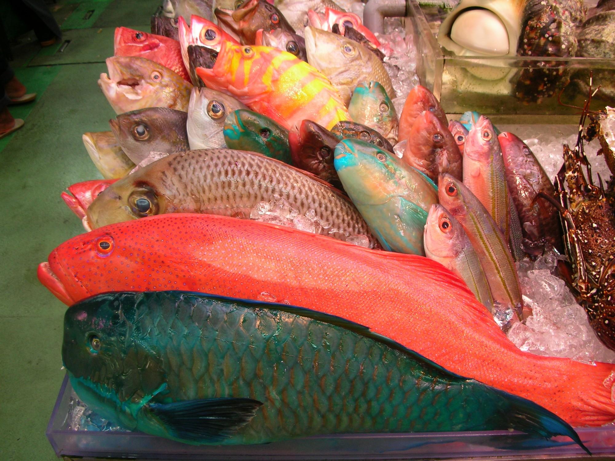 ETO_fish.JPG